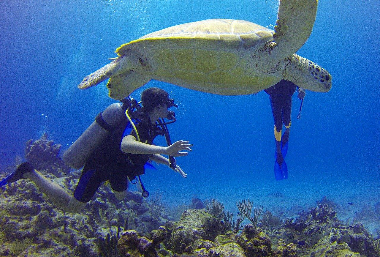 diver, turtle, mexico